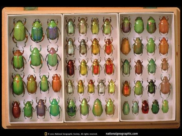 jewel-scarabs-672166-sw